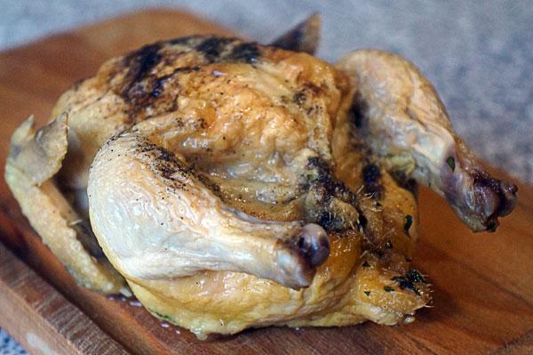 цыплята2