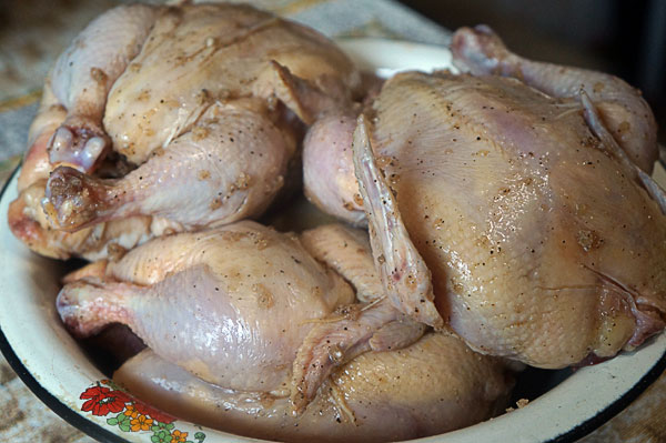 цыплята3