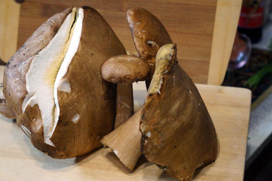 грибы-белые